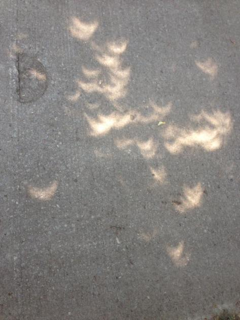 Eclipse crescents by Amanda